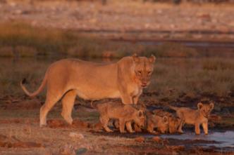 """""""Südafrika"""" – Von Kapstadt zum Kilimanjaro - ein 3D Foto-Vortrag"""